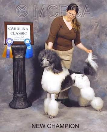 Wall of Honor | United Poodle Association